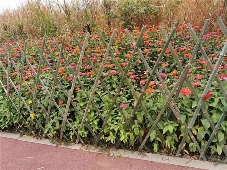 罗山竹篱笆竹护栏室外栏杆pvc草坪护栏(中闻资讯)