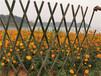 象山竹圍欄竹護欄竹籬笆pvc護欄圍墻護欄