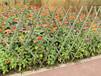 銀海竹圍欄碳化竹圍欄竹籬笆pvc護欄鑄鐵護欄