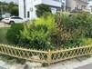 雙柏竹籬笆木柵欄竹子籬笆籬笆圍欄上饒弋陽