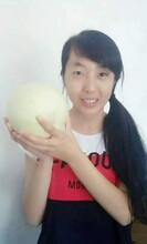 中国西瓜之乡,东明刘墙精品西瓜甜瓜,价格可沟通