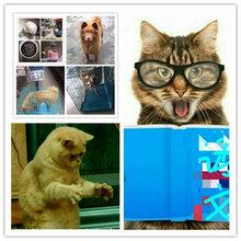 东莞至全国宠物托运,办宠物随机,预定优惠,上门接送图片