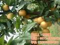 郑州农家乐去哪里,郑州水果采摘好去处图片