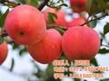郑州生态观光游哪里好,郑州水果采摘好去处图片