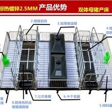 福临(猪哈哈)育仔床欧式定位栏限位栏双体产床质量优