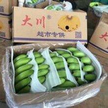 云南香蕉价格