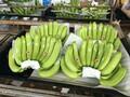 云南香蕉基地代办发货图片