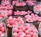 生鲜水果苹果价格买卖