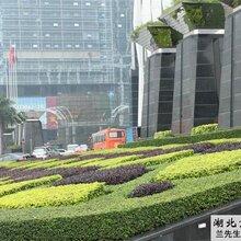 如何做好厂区绿化?湖北京华殿园林专业从事园林绿化,厂区绿化设计施工,园林景观设计施工图片