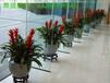 广州增城新塘绿植租赁、花卉出租,植物租摆