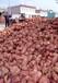 佳木斯红香蕉红薯批发价衡水红香蕉红薯行情