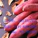 铜川黄皮苏薯8号红薯品种鄂州黄皮苏薯8号红薯供应