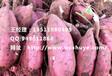 漯河西农431红薯产地邢台西农431红薯基地
