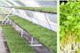 芽苗菜种植技术