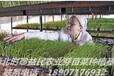 湖南芽苗菜种植基地微工厂