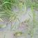 湖北青蛙养殖种苗基地