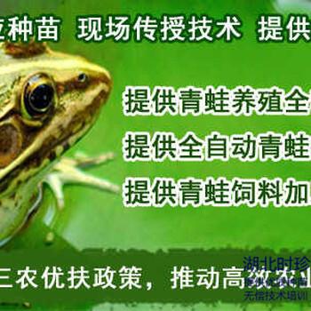湖北青蛙养殖