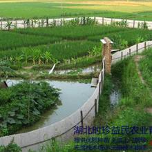 湖北養殖青蛙前景,湖北時珍益民農業青蛙養殖一本萬利圖片
