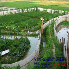 湖北养殖青蛙前景,湖北时珍益民农业青蛙养殖一本万利图片