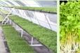 家庭種植芽苗菜