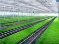 芽苗菜的市场前景图片