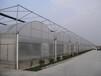 蔬菜温室大棚温室大棚