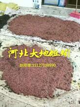 蚯蚓养殖图片
