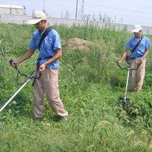 批发零售四冲程CG431割草机背负式割草割灌机便携式割草机价格