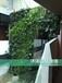 厦门植物墙、绿墙、立体绿化