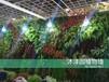 我司专业承接绿墙、植物墙等
