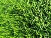 休闲景观人造草坪草高10mm