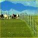 供青海玉树草原网和西宁养殖用网批发