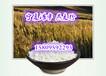 燕麥粉燕麥熟粉燕麥提取物寧夏浩宇燕麥膳食纖維粉60%