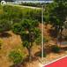 临沂户外6米8米篮球场灯杆供应厂家热镀锌灯杆工厂促销价