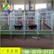 山东菏泽购买定位栏减少流产率母猪定位栏带复合漏粪板好处