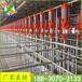 猪用饲喂设备自动化料线猪用料线绞龙主机自动上料系统
