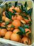 广州水果批发市场广州批发广州脐橙批发图片