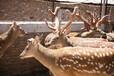 吉林鹿產品多少錢-吉林鹿產品哪家好