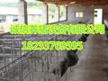 母猪定位栏厂家自产自销保证货真价实养猪设备全套连体限位栏母猪产床图片