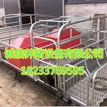 养猪设备漏粪板母猪产床双体新款肥猪产床定位栏价格实惠自产自销厂家
