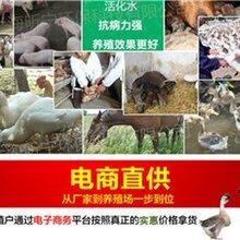 禽畜活水器质量好禽畜活水器批发找昕宁环保提供