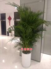 绿植盆栽松江区出租室内花卉盆栽路植植物租摆植物租赁市区