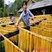 广西南宁腐竹机商用枝条均匀仿手工腐竹机价格优惠