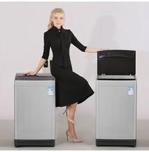 湖南TCL投币洗衣机,6.5公斤波轮洗衣机全国联保图片