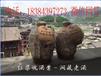 贵州茅台五粮液洞藏老酒