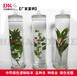 中药浸制标本植物保色标本瓶高45cm直径12cm标本馆展览展示