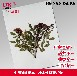 中草药植物标本腊叶标本规格:3040cm标本馆展览展示