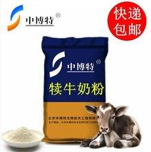 牛犊可以喂奶粉吗图片