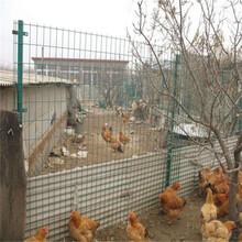 养殖荷兰网厂家护栏网浸塑坚固实用使用寿命长图片