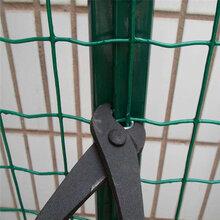 河北荷兰网生产厂家不锈钢丝浸塑防腐蚀环保绿色图片